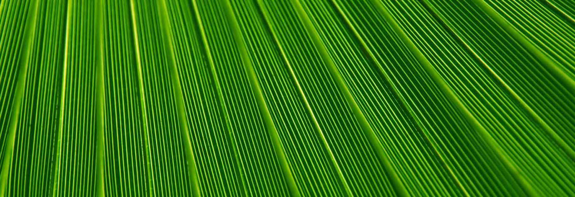 green colour 1 - ویژگی های رنگ در طراحی داخلی و اثرات روانی و فیزیولوژیکی آنها