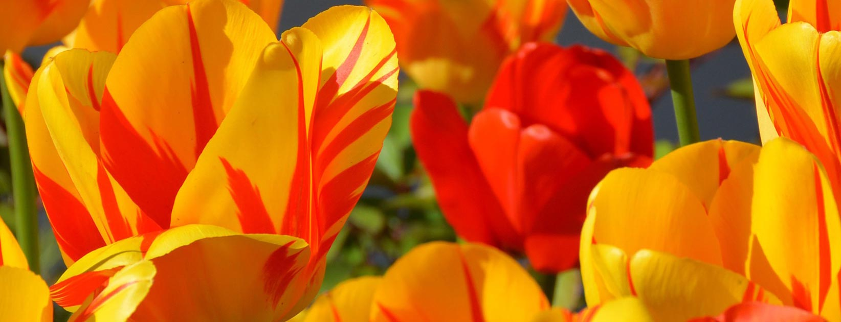 orange colour - ویژگی های رنگ در طراحی داخلی و اثرات روانی و فیزیولوژیکی آنها