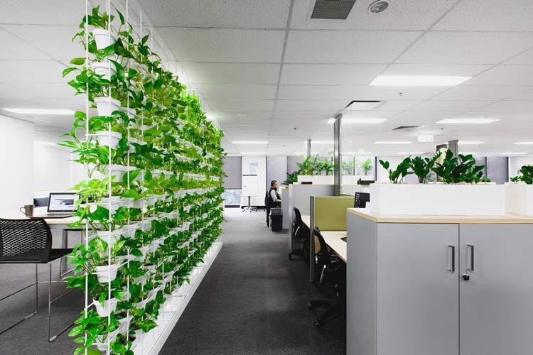Wall plants - گیاهان در دکوراسیون