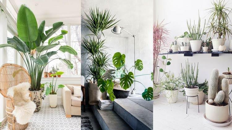 lighting for plants interior - گیاهان در دکوراسیون