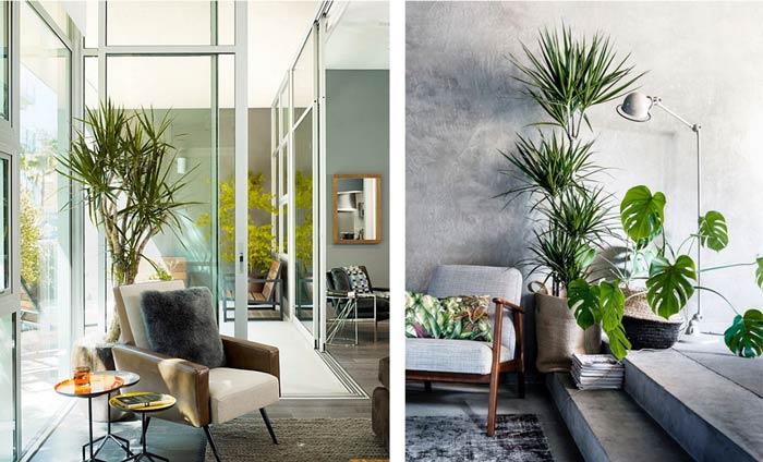 plant interior design - گیاهان در دکوراسیون