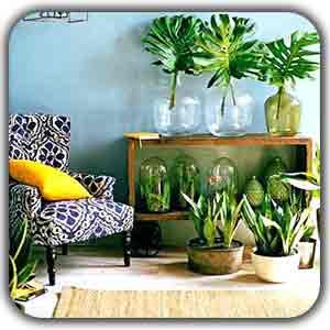 گیاهان در دکوراسیون