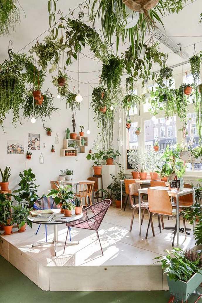 plants interior design - گیاهان در دکوراسیون