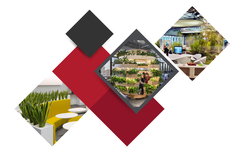 biophilic design - ۷ مفهوم نوین طراحی دکوراسیون داخلی محل کار برای جذب بهترین نیروی کار