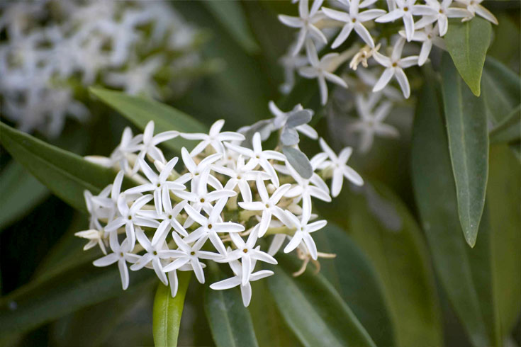decorasion giyahan kenar estakhr18 - بهترین گیاهان مناسب برای اطراف استخر